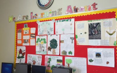 Tree Projects in Room 12