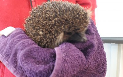 Hedgehog Rescue Dublin Visit Room 11