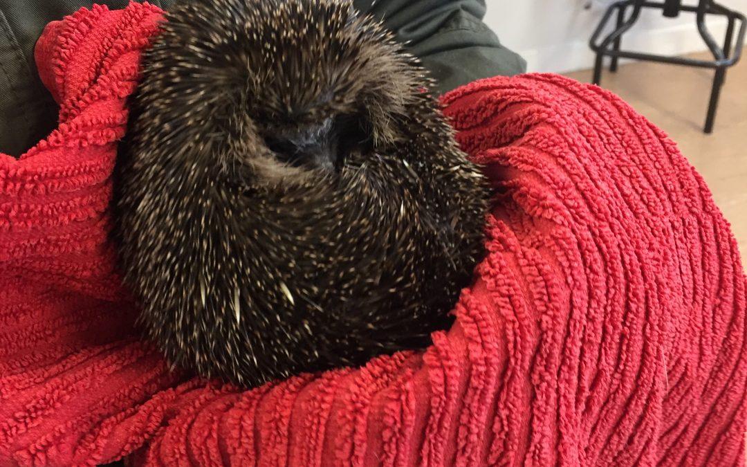 Hedgehogs visit 3rd class